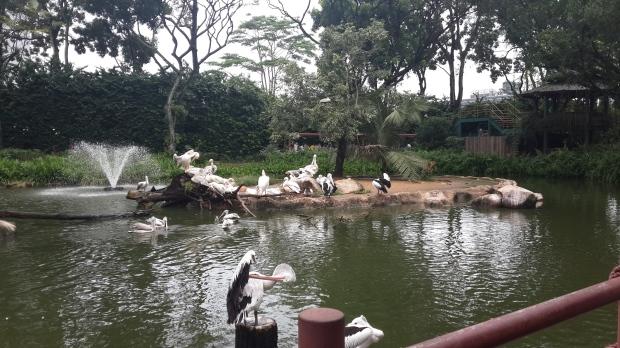 Kolam Burung Pelikan