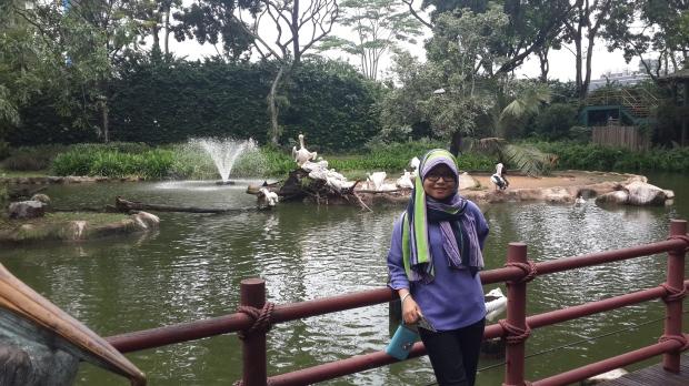 Kolam Pelikan