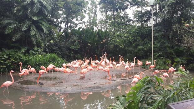 Pink Flamingo cantik