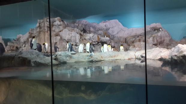 Penguin Cost at Jurong Bird Park
